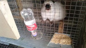 Поилка для кроликов в клетке