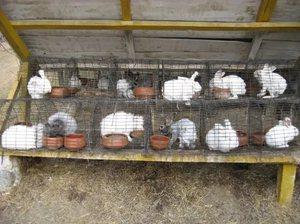 Чашечная поилка для кроликов