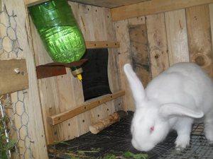 Вакуумная поилка для кроликов