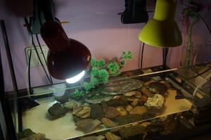Уф лампы для черепахи