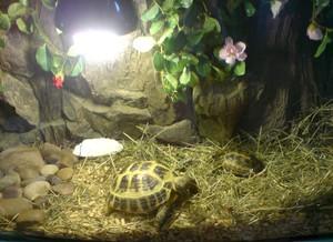 Советы для желающих ухаживать за красноухой черепахой