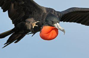 Описание самой быстрой птицы