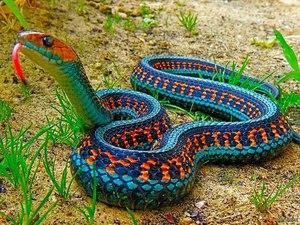 Какие виды змей бывают