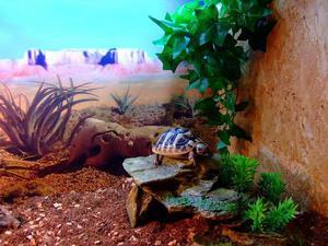 Сухопутная черепаха в террариуме
