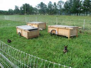 Какими травами нельзя кормить кроликов