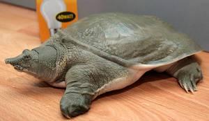Где обитает черепаха