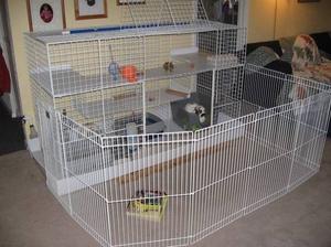 Клетка для кролика - как выбрать правильно