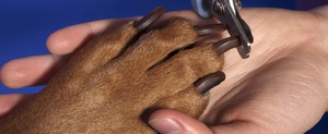 Обрезка когтей собаки