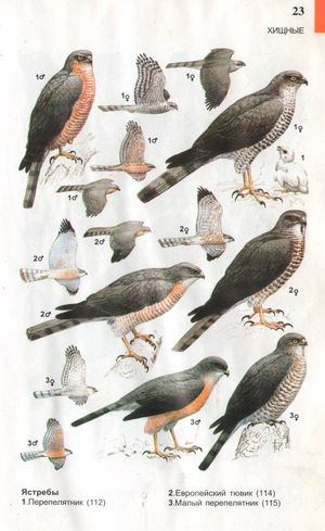 Картинки птиц