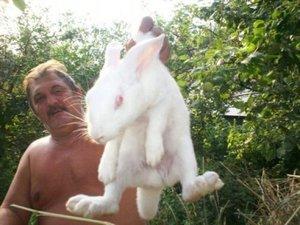 Какие есть породы кроликов