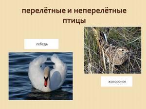 Какие птицы зимуют, а какие перелетают