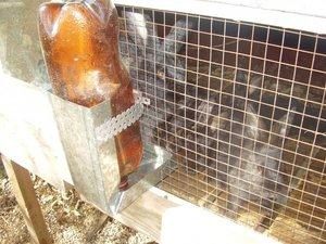 Бункерная кормуша для кроликов