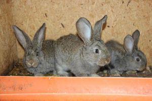 Чем питается кролик