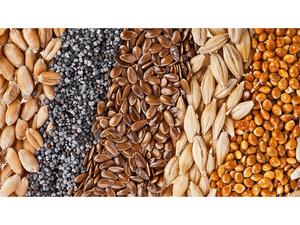 Семечки и зерна для щеглов