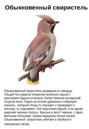 Как выглядит птица с хозолком