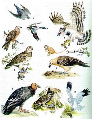 Птицы, населяющие среднюю полосу России