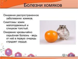 Чем болеют хомяки