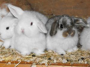 Лечение болезней кроликов