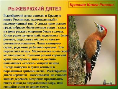 Редкие и исчезающие виды птиц, занесенных в Красную книгу