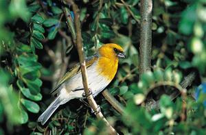 Редкие птицы- палила