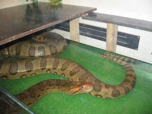 Опасные змеи