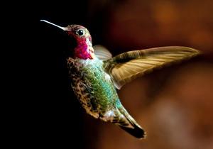 Характеристика птицы