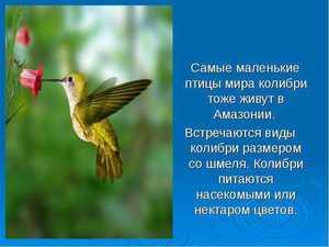 Самая маленькая птица
