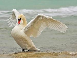Описание самых больших и самых красивых птиц