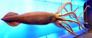 Глубоководный кальмар