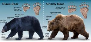Возможности медведя