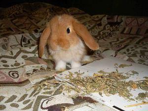 Сколько живут домашние кролики
