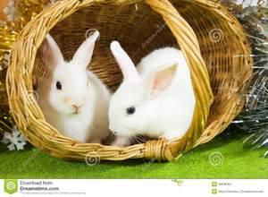 Декоративные вислоухие кролики