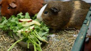 Питание питомца должно быть сбалансированным и включать различные виды продуктов