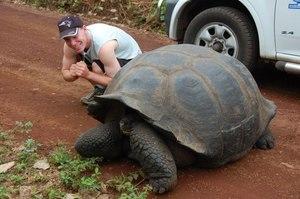 Боязливая слоновая черепаха спряталась