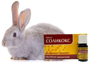 Препарат соликокс