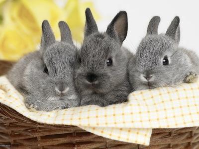 Соликокс для кроликов: инструкция по применению, применение для птиц