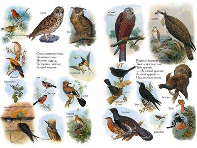 Списки птиц России из энциклопедии