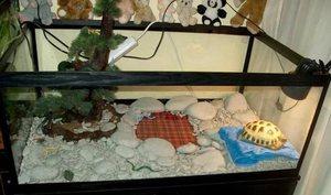 Содержание черепахи в террариуме