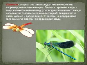 Как живут стрекозы