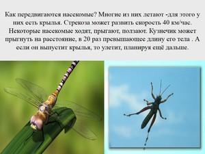 Стрекоза это насекомое