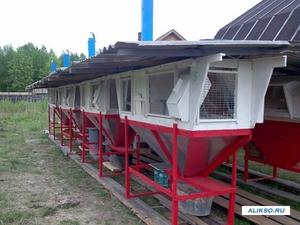 Строительство мини-фермы для кроликов