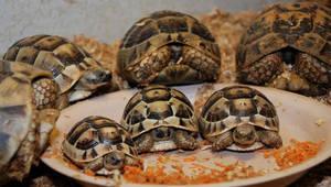 Как ухаживать за черепахами