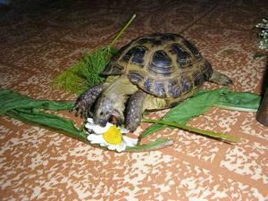 Уход за черепахами