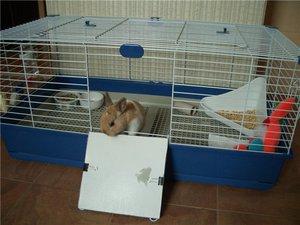 Содержание кроликов в доме