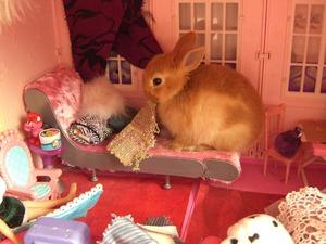 Что ест кролик