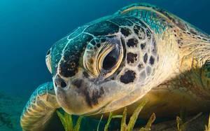 Кости черепа черепахи показаны на фото