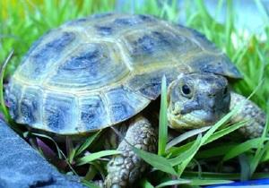 Черепахи в доманшних условиях