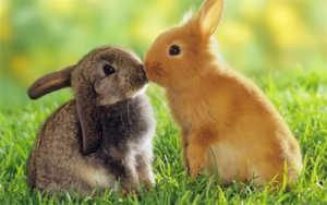 Знаете ли вы, чем отличаются зайцы от кроликов?