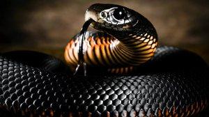 Змея чёрная мамба описание