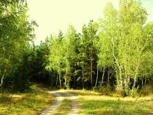 Лиственные леса-обиталище медянки